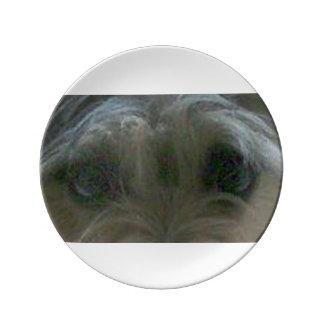 cairn terrier eyes porcelain plate