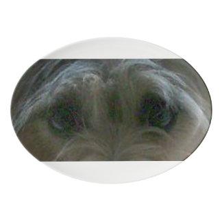 cairn terrier eyes porcelain serving platter