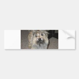 cairn terrier full bumper sticker