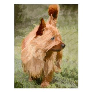 Cairn Terrier - Painting Postcard