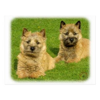 Cairn Terrier puppies 9W048D-035 Postcard