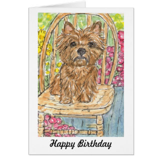 Cairn Terrier sitting in garden birthday card