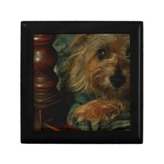 Cairn Terrier Small Square Gift Box