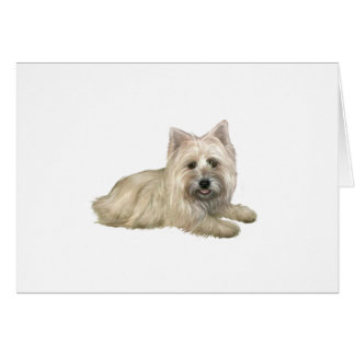 Cairn Terrier (Wheaten) - lying down Card