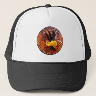 Cake top baking trucker hat