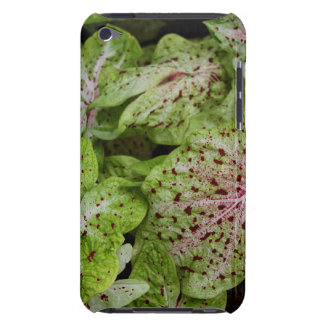 Caladium Gingerland Case-Mate iPod Touch Barely There iPod Case