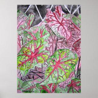 caladiums_plant_painting