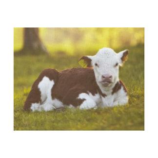 Calf resting in rural landscape canvas print