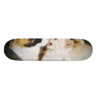 CALICO CAT AND WHITE KITTY SKATE BOARD DECKS