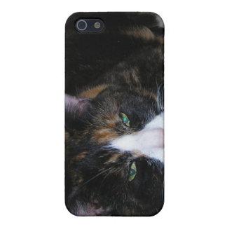 Calico Cat Case For iPhone 5/5S