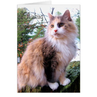 Calico Cat Custom Thinking Of You Card