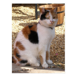 Calico cat in the garden postcard
