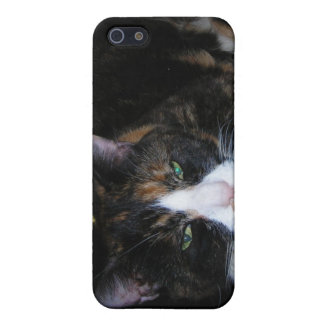 Calico Cat iPhone 5/5S Covers
