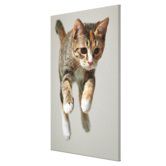 Calico Cat Jumping Gallery Wrap Canvas