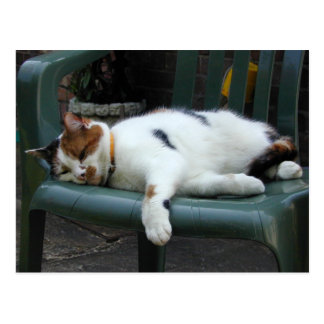 Calico cat lying on a chair postcard