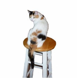 Calico Cat Photo Sculpture Decoration