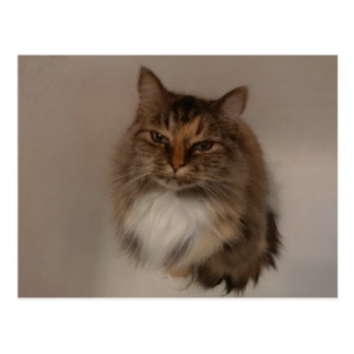 Calico Cat post card