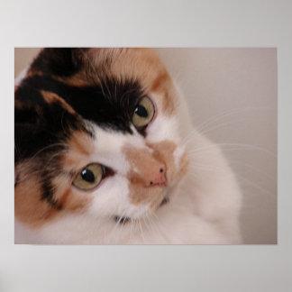 Calico Cat Poster