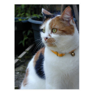 Calico cat sitting outside postcard