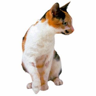 Calico Cat Standing Photo Sculpture