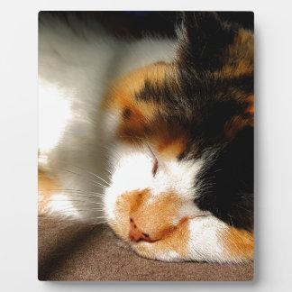 Calico Cat Sunning Plaque