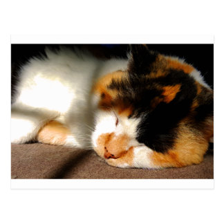 Calico Cat Sunning Postcard