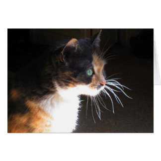Calico Cat Whiskers Greeting Card