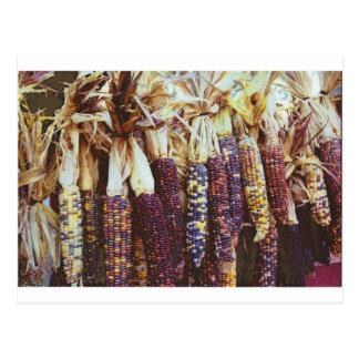 Calico Corn Postcard