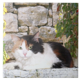Calico in stone window large square tile
