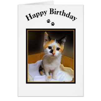 Calico Kitten Happy Birthday Greeting Cards