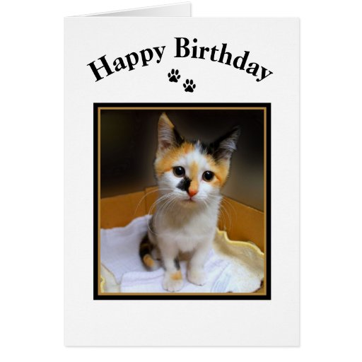 Calico Kitten Happy Birthday Greeting Cards
