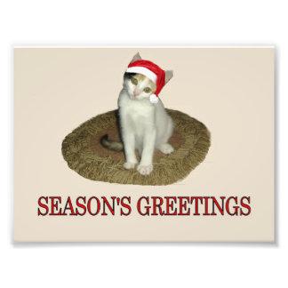 Calico Kitten s Season s Greetings Photographic Print