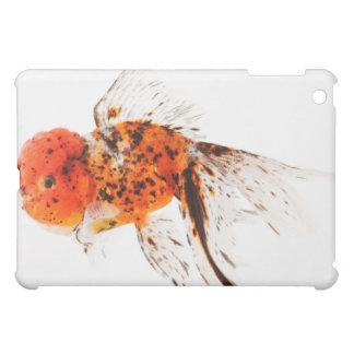 Calico lionhead goldfish (Carassius auratus). Cover For The iPad Mini