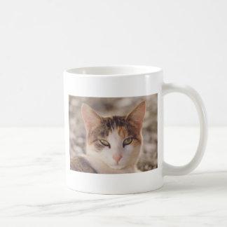 calico mugs