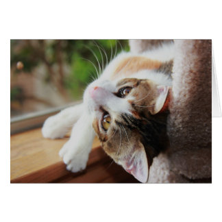 Calico on the Windowsill, precious kitty notes
