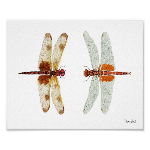 Calico Pennant & Red Saddlebags Dragonflies Poster
