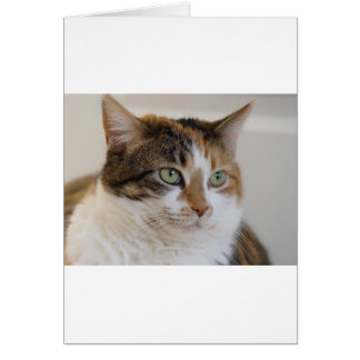 Calico tabby cat face card