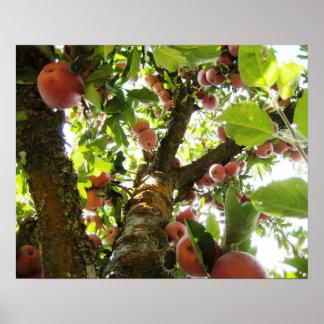 California Apple Tree Poster