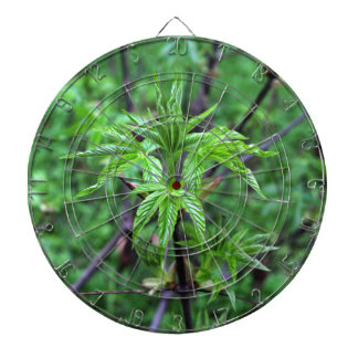 California Buckeye Seedling Dart Board
