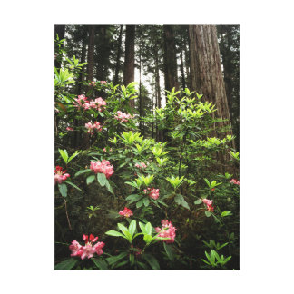 California, Del Norte Coast Redwoods State Park Canvas Print