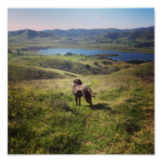 California Dog Walk Poster