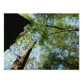 California Forest Photo Print