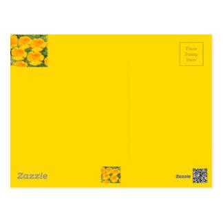 California Golden Poppy Postcard