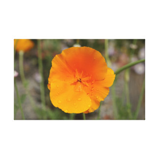 California Golden Poppy Stretched Canvas Print