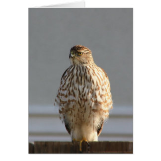 California Hawk greeting card