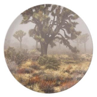 California: Joshua Tree National Monument, Party Plates