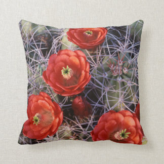 California, Joshua Tree National Park, Claret Cushion