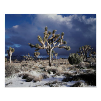 California, Joshua Tree National Park Poster