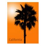 California Palm Postcards
