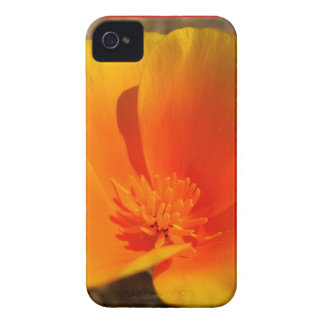 California Poppies BlackBerry Bold Barely There™ Blackberry Bold Cover